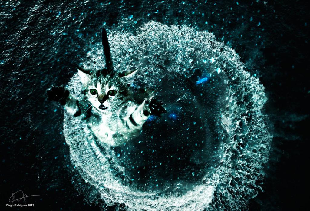 _wallpaper_hd__brave_cat_by_bark45-d5h6ro2